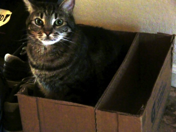 Jonsie in box